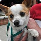 Adopt A Pet :: Miguel
