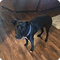Adopt A Pet :: Raven - Monroe, NC