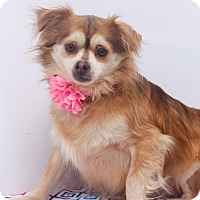 Adopt A Pet :: Lily - Loomis, CA