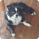 Adopt A Pet :: Maximillion-ADOPTION PENDING