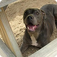 Adopt A Pet :: Cletus - Columbus, MS