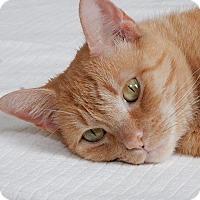 Adopt A Pet :: Emily - Long Beach, NY