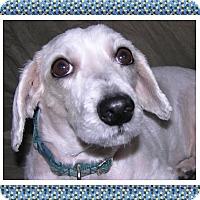 Adopt A Pet :: Pending!!Popper - IL - Tulsa, OK