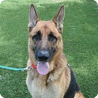 Adopt A Pet :: IO - Bradenton, FL
