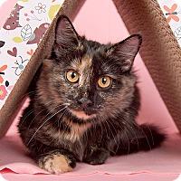 Adopt A Pet :: Annabelle - Wilmington, DE