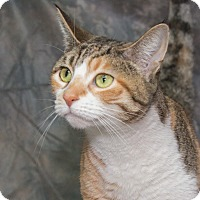 Adopt A Pet :: Ginger - Elmwood Park, NJ