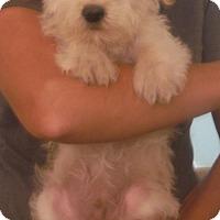 Adopt A Pet :: Mo - Venice, FL
