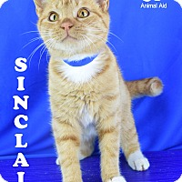 Adopt A Pet :: Sinclair - Carencro, LA