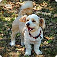 Adopt A Pet :: ROLAND - Mission Viejo, CA
