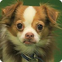 Adopt A Pet :: Cisco - Lafayette, IN