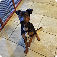 Adopt A Pet :: Jax - Morganville, NJ