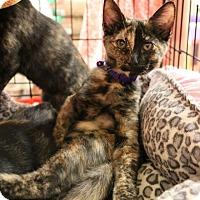 Adopt A Pet :: Graffiti - Athens, GA