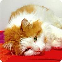 Adopt A Pet :: Phoenix - Salt Spring Island, BC