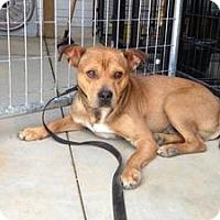 Adopt A Pet :: Spirit - Laingsburg, MI