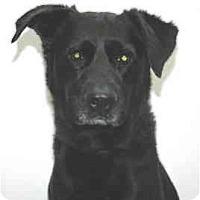 Adopt A Pet :: Toby - Port Washington, NY