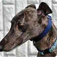 Adopt A Pet :: Wasbi - Rancho Santa Margarita, CA