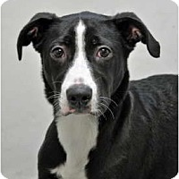 Adopt A Pet :: Ellie Mae - Port Washington, NY