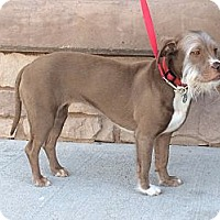 Adopt A Pet :: Ridley - Phoenix, AZ