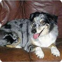 Adopt A Pet :: Tuffy - Orlando, FL