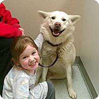Adopt A Pet :: Sylus - Wasilla, AK