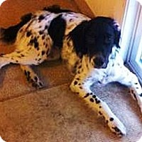Adopt A Pet :: Kasey - Puyallup, WA