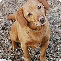 Adopt A Pet :: Maddie - Marietta, GA