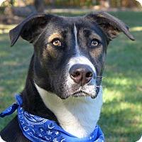 Adopt A Pet :: Gabe - Mocksville, NC