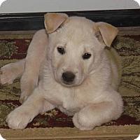 Adopt A Pet :: Snowball - Phoenix, AZ