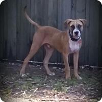 Adopt A Pet :: Hank - Orlando, FL