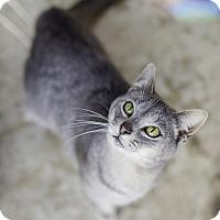 Adopt A Pet :: Maric - Fredericksburg, VA