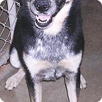 Adopt A Pet :: SCOOBYBOY - Yucaipa, CA