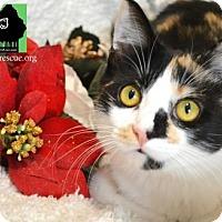 Adopt A Pet :: Amaretto - Little Rock, AR