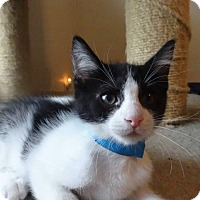Adopt A Pet :: Double Stuff - Colmar, PA