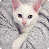 Adopt A Pet :: Bunny - Taylorsville, IN