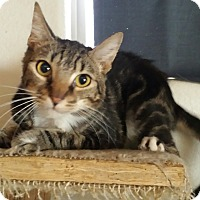 Adopt A Pet :: Jeepers - Mesa, AZ