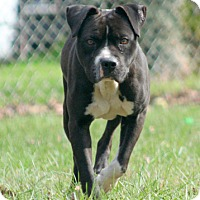 Adopt A Pet :: T-Bone - Oxford, NC