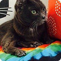 Adopt A Pet :: Paulie-D - Addison, IL