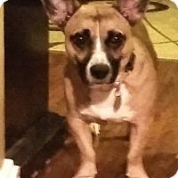 Adopt A Pet :: Bosley - Davenport, IA