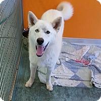 Adopt A Pet :: Alpine - Dixon, KY