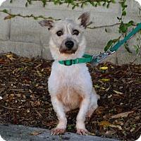 Adopt A Pet :: Sky - Palo Alto, CA