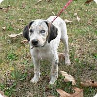 Adopt A Pet :: Pax - New Oxford, PA
