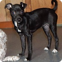 Adopt A Pet :: Emily - Homer, NY