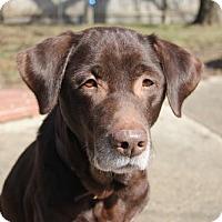 Adopt A Pet :: Mimi - Island Lake, IL
