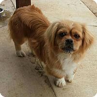 Adopt A Pet :: Pocahontas - Santa Ana, CA