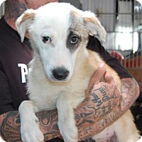 Adopt A Pet :: Maddy - Brooklyn, NY
