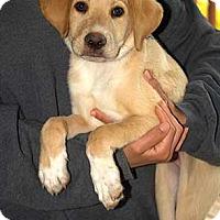 Adopt A Pet :: Luke - Patterson, NY
