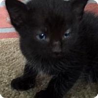 Adopt A Pet :: Loyal - Porter, TX
