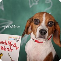 Adopt A Pet :: Daisy 3152 - Toronto, ON
