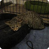Adopt A Pet :: Amy - St. Louis, MO