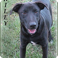 Adopt A Pet :: Riley- STOP! READ ABOUT ME! - Marlborough, MA
